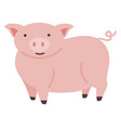 pink cute pig on white background vector image