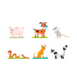 sick and wounded animals set veterinary care pig vector image