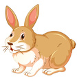 Brown rabbit on white background vector image vector image
