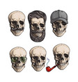 human skull bones with sunglasses beard vector image vector image