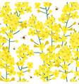 seamless rape plant pattern flower vector image vector image