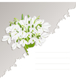 Snowdrop flowers vector image vector image