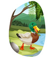 tn mallard duckFBD 02 vector image