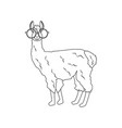 llama in round glasses outline vector image