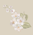 white cherry blossom flowers vector image