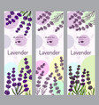 herbal tea collection lavender vector image