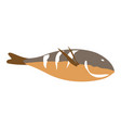 isolated fish vector image