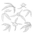 set beautiful black and white peony leaves and vector image