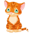 Cute Tabby Kitten vector image