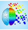 Colored left brain and right brain vector image vector image