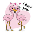 couple of flamingos in love vector image
