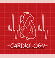 human heart and heartbeat vector image vector image