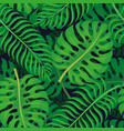tropical leaves on a dark background vector image