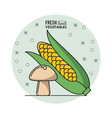 colorful poster of fresh vegetables with cob corn vector image vector image