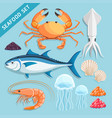 seafood set crab squid tuna shrimp jellyfish vector image