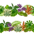 Seamless borders with tropical plants and leaves vector image vector image