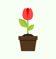 small grow tulip flower plant graphic vector image