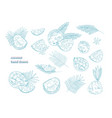 bundle of drawings of whole and split coconut vector image vector image