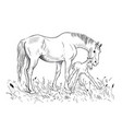 mare and foal vector image vector image