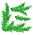 set green spruce branches vector image vector image