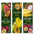 banners of tropical exotic fruit juice vector image vector image