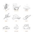 Doodle cereals groats porridge muesli vector image vector image