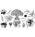 set olive oil and branch trees organic vector image vector image