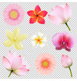 flowers collection in transparent background vector image vector image