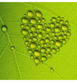 heart droplets leaf vector image vector image
