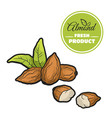 colored almond on white vector image