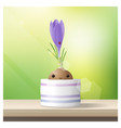 hello spring background with spring flower crocus vector image vector image