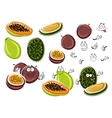 Papaya maracuja and durian fruits vector image vector image
