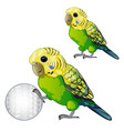 wavy green parrot or budgerigar isolated on white vector image vector image