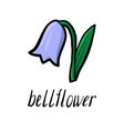 flower of bell vector image vector image
