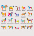 set of colorful mosaic dogs silhouettes-5 vector image vector image