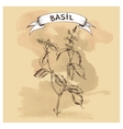 sketch of basil for design vector image vector image