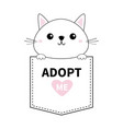 cute cat holding pocket adopt me pink heart vector image vector image