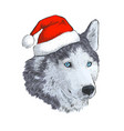 husky in santa hat portrait engraving hand vector image