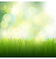 natural background of grass vector image