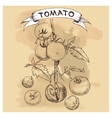 set of tomatoes for design vector image vector image