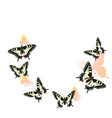 swallowtail butterflies flying in a circle vector image vector image