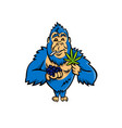 gorilla holding blueberry and cannabis leaf mascot vector image