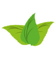 isolated leaves plant vector image vector image