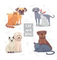 cute cat and dog cartoon home pet vector image