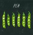 black board green pea pod healthy bio vegetarian vector image