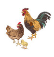 hand drawn rooster hen and chicken vector image vector image