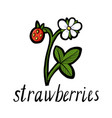 plant of strawberry vector image
