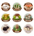 set of mushroom logos stickers vector image