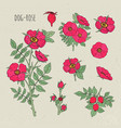 dog rose medical botanical isolated vector image vector image