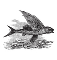 Flying Fish vintage engraving vector image vector image